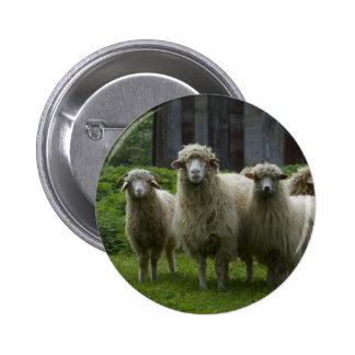 Cool Flock of Sheep | Farmland Pinback Button