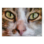 Cool For Cats Greeting Card