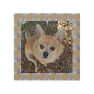 Cool Foxy Chihuahua framed w/flowers wood wall art