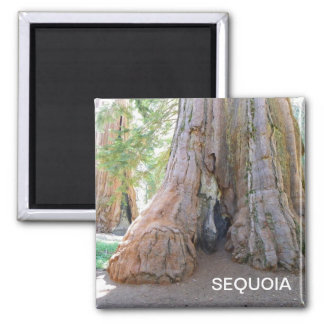 Cool Giant Sequoia Magnet! Magnet