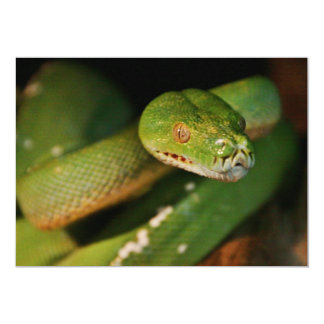 Cool Green Tree Boa Card