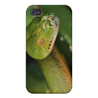 Cool Green Tree Boa iPhone 4 Cover