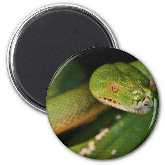 Cool Green Tree Boa Fridge Magnet