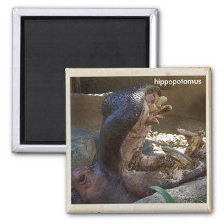 Cool Hippopotamus Magnet! Magnet