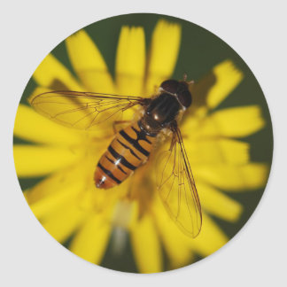 Cool Honey Bee on Flower in Nature Photography Classic Round Sticker