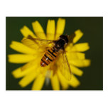 Cool Honey Bee on Flower in Nature Photography Post Card