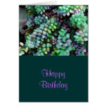Cool Hued Burro's Tails in the Hot Desert Greeting Card