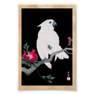 Cool japanese white cockatoo parrot tropical bird poster