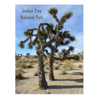 Cool Joshua Tree Postcard! Postcard