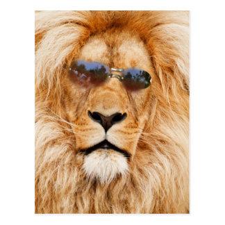 Cool Lions face Postcards