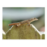 Cool Lizard Photography Postcards