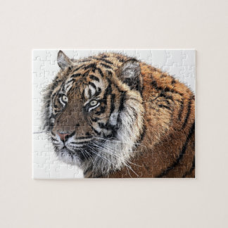 Cool Orange Majestic Tiger with Intense Stare Jigsaw Puzzle