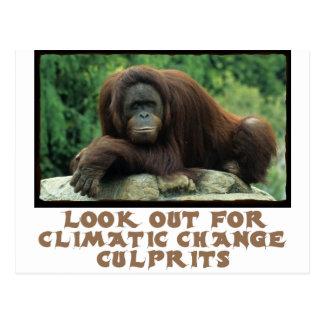 cool Orangutan designs Postcard