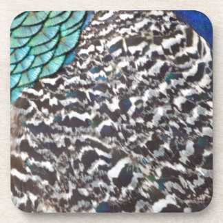 Cool Peacock Feathers Beverage Coaster