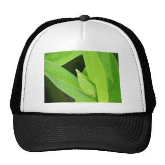 Cool plantbud trucker hat