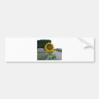 Cool Retro Trendy Hakuna Matata Gifts Sunflower de Bumper Sticker