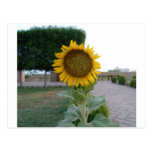 Cool Retro Trendy Hakuna Matata Gifts Sunflower de Post Card