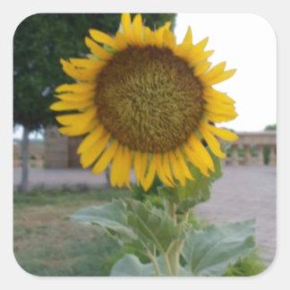 Cool Retro Trendy Hakuna Matata Gifts Sunflower de Square Sticker