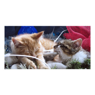 Cool Snow Cats, Two Kittens in Love, Winter Skates Photo Card Template
