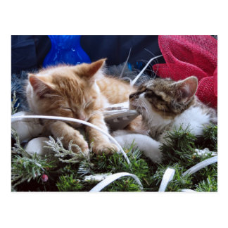 Cool Snow Cats, Two Kittens in Love, Winter Skates Postcard