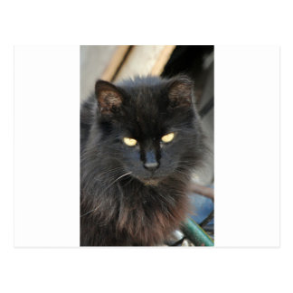 Cool Stray Black Cat Glowing Eyes Postcard