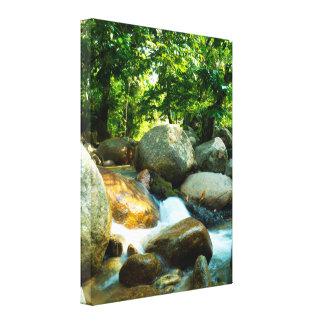 Cool stream in a Tropical Rainforest Canvas Print
