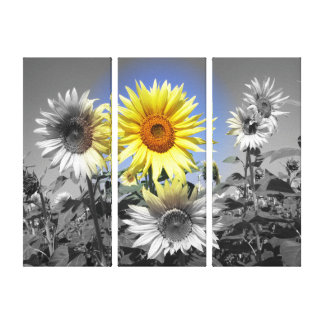 Cool Sunflowers Canvas Print