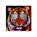 Cool Tiger Postcard