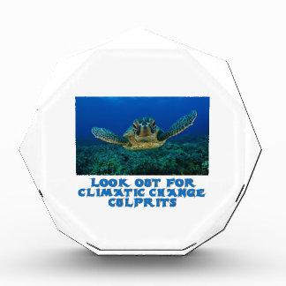 cool Turtle designs Award
