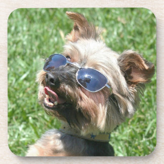 Cool Yorkshire Terrier Drink Coaster