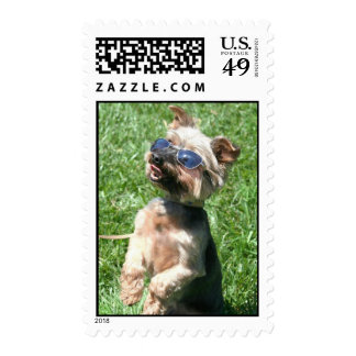 Cool Yorkshire Terrier postage