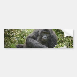 cool young mountain gorilla bumper stickers