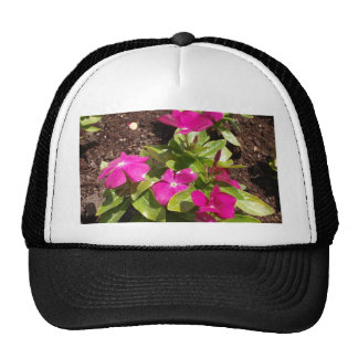 Cooler Orchid Deep Trucker Hat