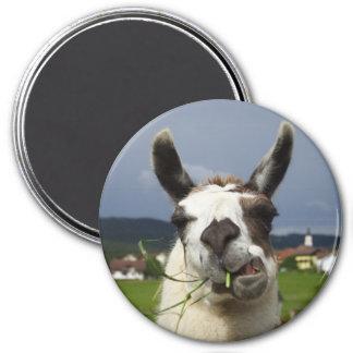 Coolest LLama In Austria 3 Inch Round Magnet