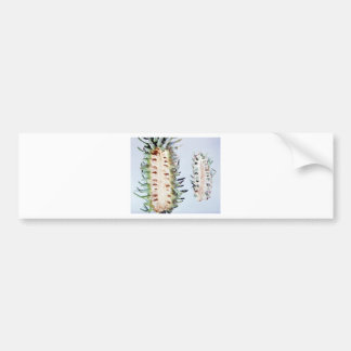Cooley Spruce Gall Adelgid and Gall Pineus Bumper Sticker