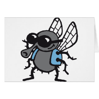 coolly fly cards