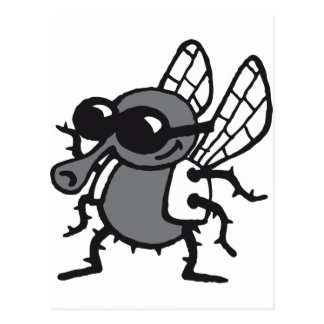 coolly fly post card