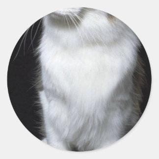 Coon Cat Classic Round Sticker