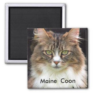 Coon de Maine Imán Cuadrado