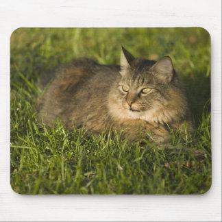 Coon de Maine (la raza más grande de gatos naciona Mousepad