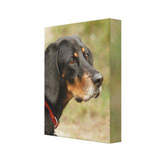 Coon hound - Gracie Lou Canvas Print