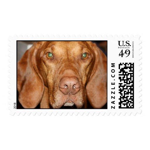 Coon Hound Postage Stamp