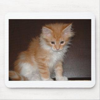 coon kitten.png de Maine Tapetes De Raton
