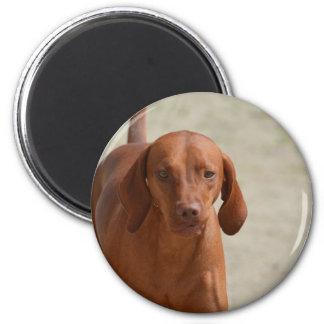 Coonhound 2 Inch Round Magnet