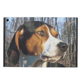 Coonhound del caminante de Treeing en maderas