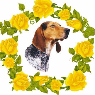 Coonhound del inglés americano y rosas amarillos