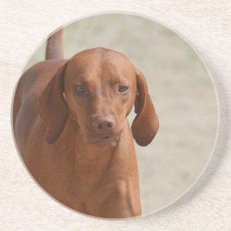 Coonhound Drink Coaster