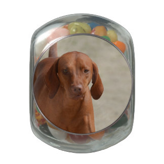 Coonhound Glass Candy Jars
