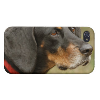 Coonhound - Gracie Lou iPhone 4 Cases