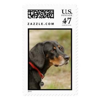 Coonhound - Gracie Lou Postage
